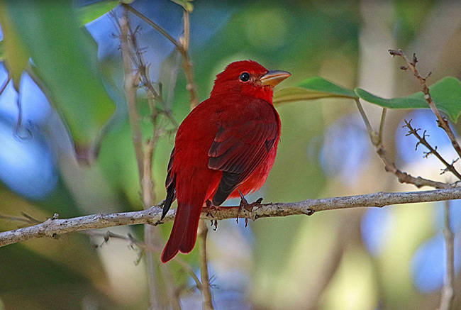 Belize Bird Watching Tour