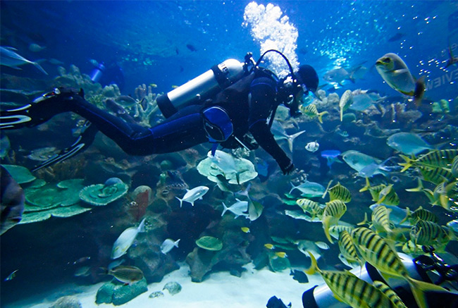 Belize diving Tours