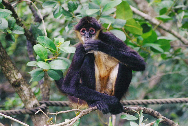 Belize Wildlife Tours