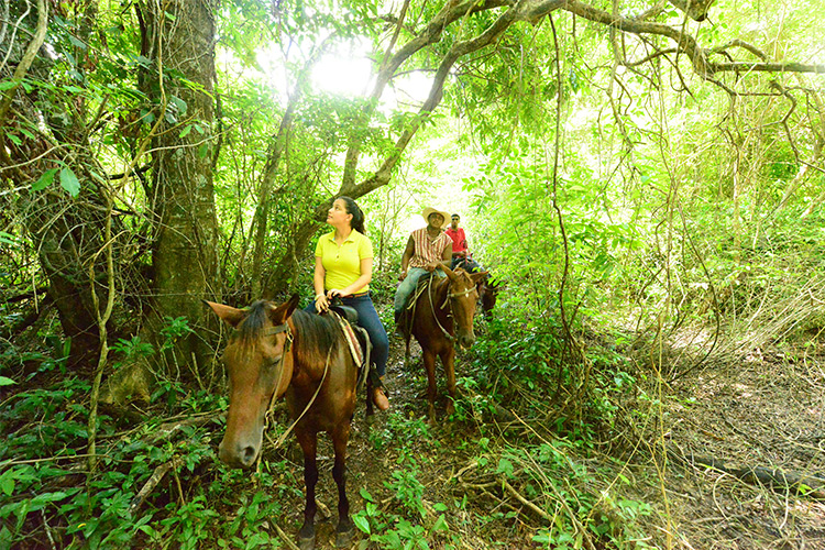 belize horseback riding tours