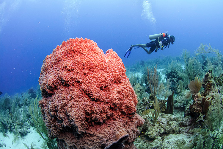 belize dive certification