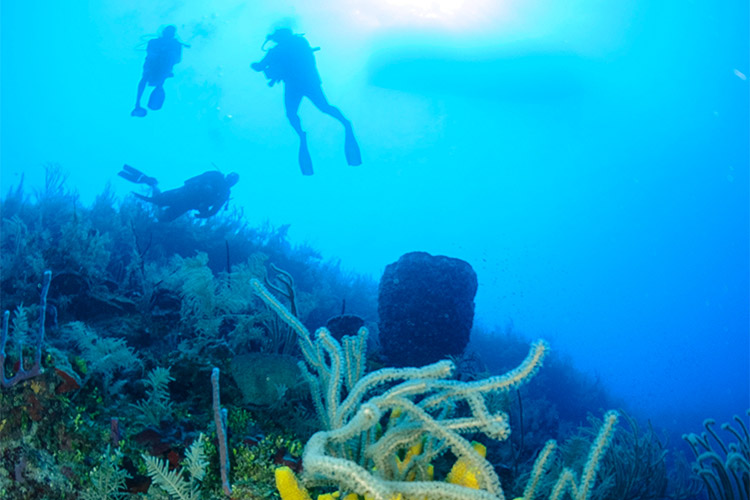 belize diving certification