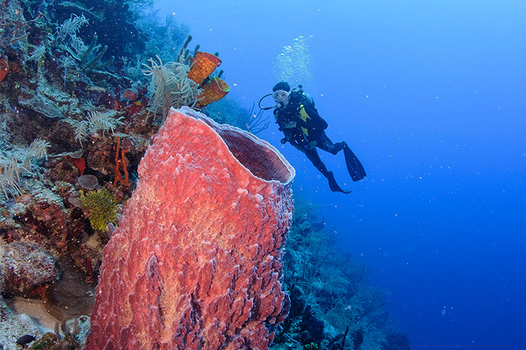 belize scuba diving certification course