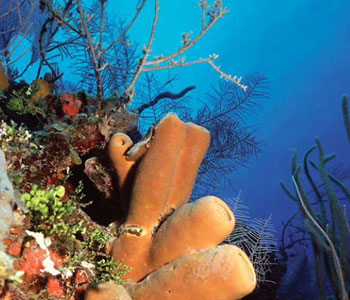 Belize Dive Packages
