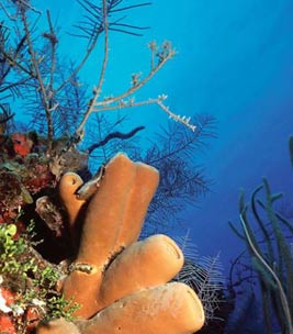Belize All Inclusive Diving