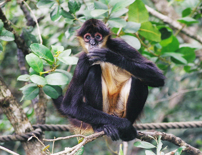Belize Monkey River Tour