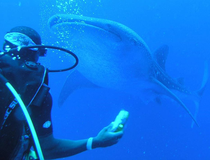 Belize Whale Shark Dive Tour